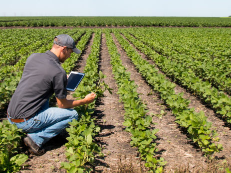Agronomist Using a Tablet in an Agricultural Field