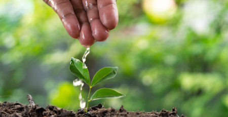 Sustainable Impact: Investing in New Life