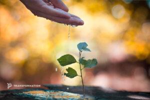 hand watering plants | TransformationHoldings