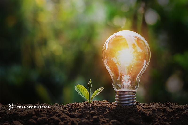 plant and light for sustainable innovations concept | TransformationHoldings.com