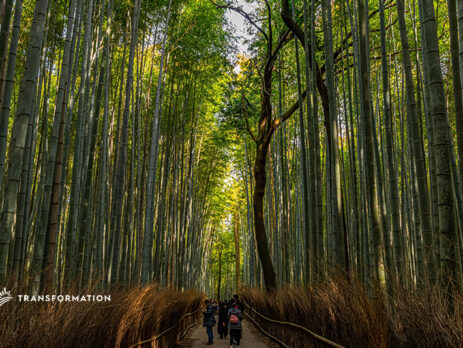 bamboo production in japan